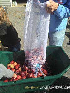 Wordless Wednesday: Apple Cider Day -zealousmom.com #wordlesswednesday #fall